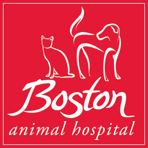 Boston Animal Hospital